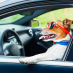 Tips for taking your dog on a road trip